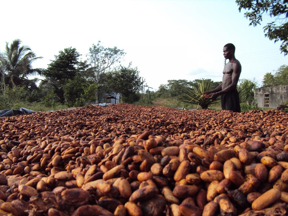 cocoa_prod_ghana