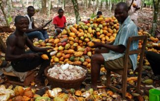 cocobod cocoa farmers in Ghana